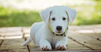 Five Tips To Help You Potty Train Your New Puppy