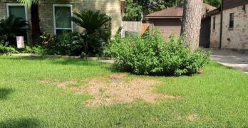 How to Protect Your Lawn From Mosquito Damage