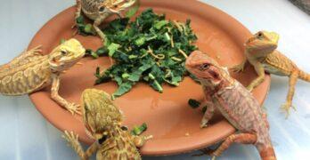 Reptiles At Home