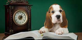What Is Your Dog Thinking? Top 5 Questions a Pet & Animal Psychic at California Psychics Can Clarify