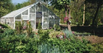 Five Ways to Continue Enjoying Your Garden Over Winter